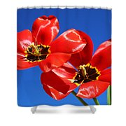 Gorgeous Red Tulips. Shower Curtain
