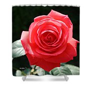 Gorgeous Rose Shower Curtain