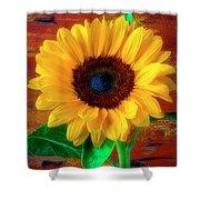 Gorgeous Rustic Sunflower Shower Curtain