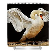 Gorgeous Swan Shower Curtain