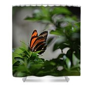 Gorgeous View Of An Oak Tiger Butterfly In The Spring Shower Curtain