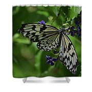 Gorgeous White Tree Nymph Butterfly With It's Wings Spread Shower Curtain