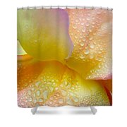 Gorgeous Wings Shower Curtain