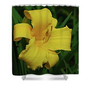Gorgeous Yellow Daylily In A Garden Blooming Shower Curtain