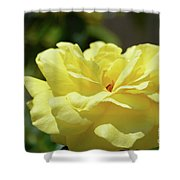 Gorgeous Yellow Rose Shower Curtain