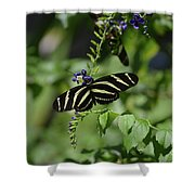 Gorgeous Zebra Butterfly On Some Blue Flowers Shower Curtain