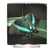 Gorgoeus Close Up Of This Emerald Swallowtail Butterfly  Shower Curtain