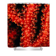 Gorgonian Coral Shower Curtain