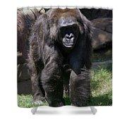 Gorilla 1 Shower Curtain