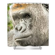 Gorilla - Como Zoo, St. Paul, Minnesota Shower Curtain