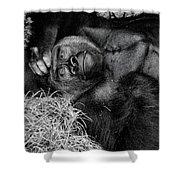 Gorilla Pose Shower Curtain