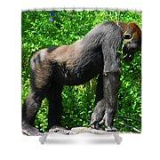 Gorilla Posing Shower Curtain