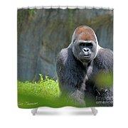 Gorilla Stare Shower Curtain