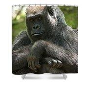 Gorilla1 Shower Curtain