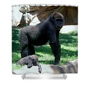 Gorillas Mary Joe Baby And Emonty Mother 6 Shower Curtain