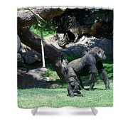 Gorillas Mary Joe Baby And Emonty Mother 7 Shower Curtain