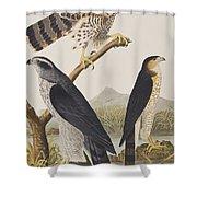 Goshawk And Stanley Hawk Shower Curtain