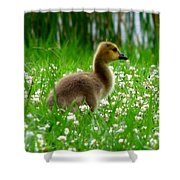 Gosling 1 Shower Curtain