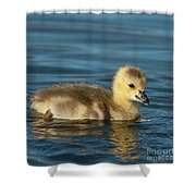 Gosling.. Shower Curtain