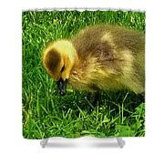 Gosling On Her Own Shower Curtain