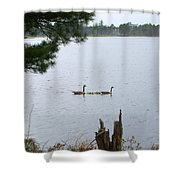 Goslings And Geese Shower Curtain