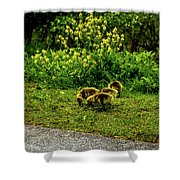 Goslings Shower Curtain