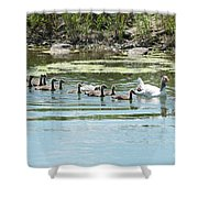Goslings In A Row Shower Curtain