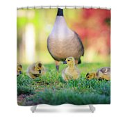 Goslings In The Park Shower Curtain