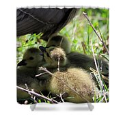 Gosling's In The Shade Shower Curtain