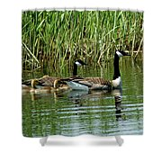 Goslings In Tow Shower Curtain