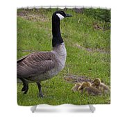 Goslings With Mother Goose Shower Curtain