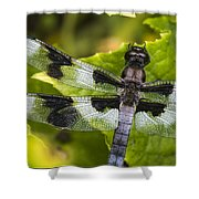 Gossamer Wings Shower Curtain