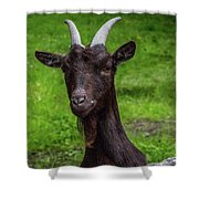 Got Something For Me? Shower Curtain