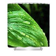 Gotas Shower Curtain