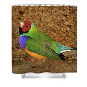 Gouldian Finch Shower Curtain
