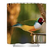 Gouldian Finche Shower Curtain