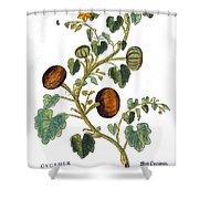 Gourd, 1735 Shower Curtain