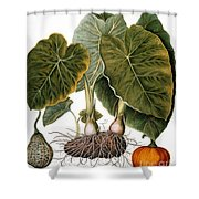 Gourd, Taro, & Pumpkin Shower Curtain