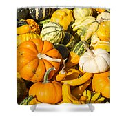 Gourds Pile 1 A Shower Curtain