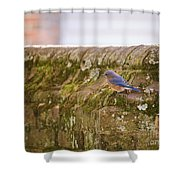 Governor's Palace Bluebird Shower Curtain