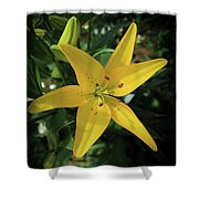 Grace Flowers Daylily Art Shower Curtain
