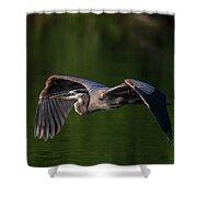 Graceful Flight Shower Curtain