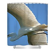 Graceful Flight Shower Curtain