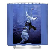 Graceful Swans Shower Curtain