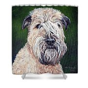 Gracie, Soft Coated Wheaten Terrier Shower Curtain