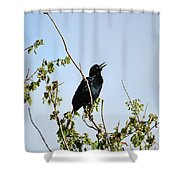 Grackle Cackle Shower Curtain