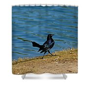 Grackle On The Move Shower Curtain