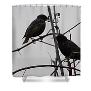 Grackles On Branches  Shower Curtain