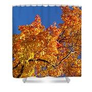 Gradient Autumn Tree Shower Curtain