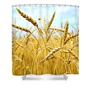 Grain Field Shower Curtain by Elena Elisseeva